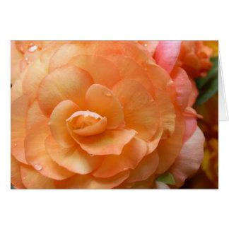 Begonia del melocotón tarjeta de felicitación