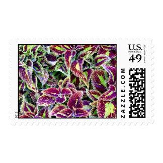 Begonia Leaves Postage