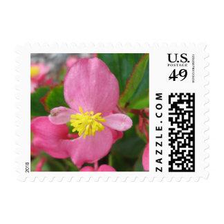 Begonia Pink Flower Postage Stamp