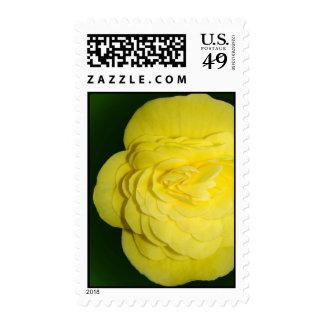 Begonia Postage