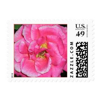 Begonia Postage Stamp