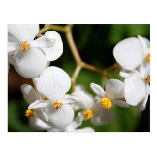 Begonia Postcard