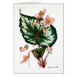 Begonia Rex Cards