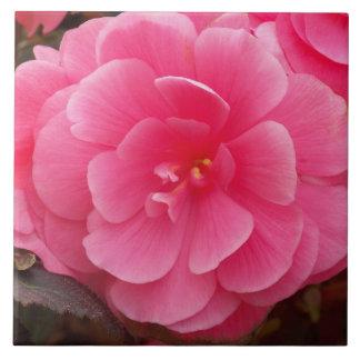Begonia rosada floral azulejo cuadrado grande