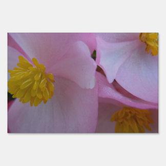 Begonia rosada suave - un arco iris del verano señal