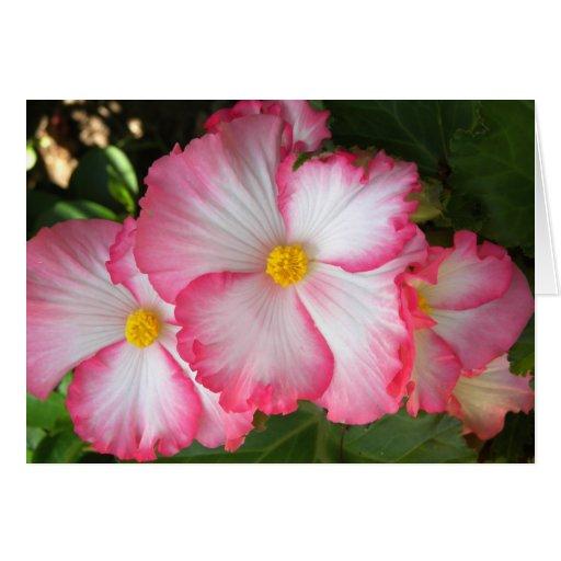 Begonias2 Card
