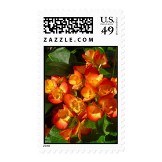 Begonias Postage Stamps