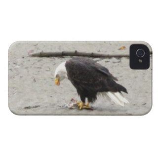 BEHF Bald Eagle Hoarding Fish iPhone 4 Cover
