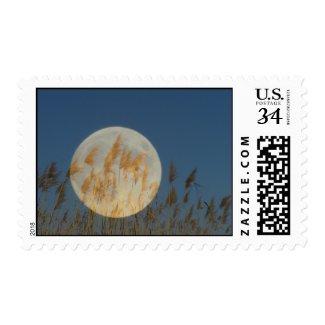 Behind Postage Stamp