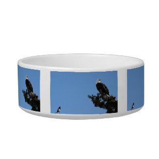 BEIAM Bald Eagle Ignores a Magpie Bowl