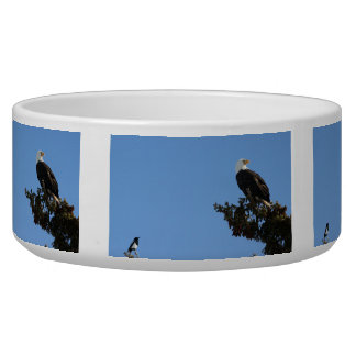 BEIAM Bald Eagle Ignores a Magpie Dog Water Bowls