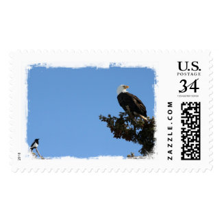 BEIAM Bald Eagle Ignores a Magpie Postage Stamps