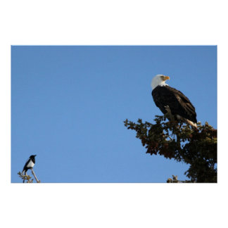 BEIAM Bald Eagle Ignores a Magpie Poster