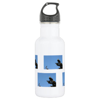 BEIAM Bald Eagle Ignores a Magpie Water Bottle