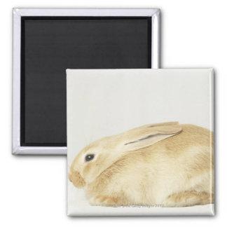 Beige bunny rabbit on white background 4 magnet