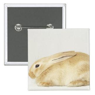 Beige bunny rabbit on white background 4 pinback button