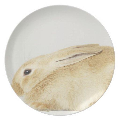 Beige bunny rabbit on white background 4 dinner plates