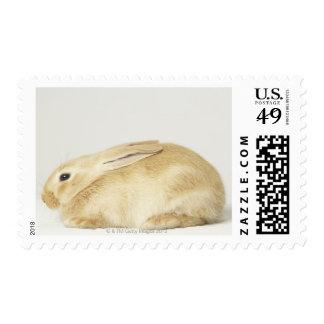 Beige bunny rabbit on white background 4 postage