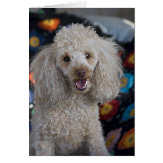 Beige Poodle Card