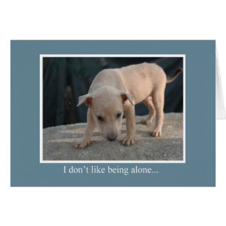 Being Alone Animal Notecards Card