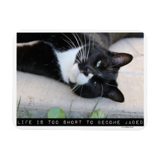Being Jaded Funny Cat Advice Rectangular Photo Magnet