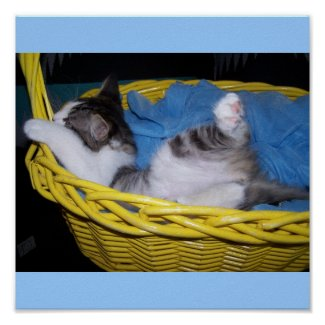 being silly kitty in basket print