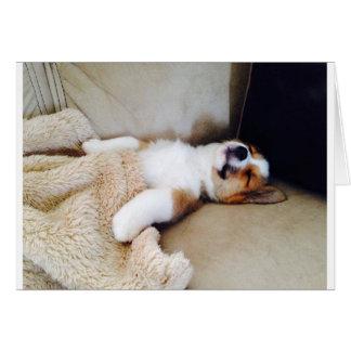 Belated Birthday Card - Sleeping Corgi Puppy