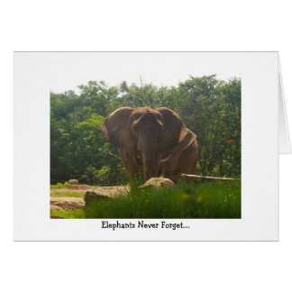 Belated Birthday--Elephants Never Forget Card