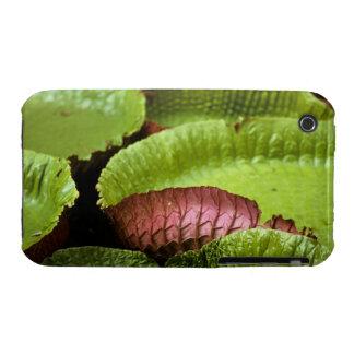 Belem, Brazil. Vitoria Regia (Victoria Case-Mate iPhone 3 Cases
