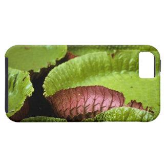 Belem, Brazil. Vitoria Regia (Victoria iPhone SE/5/5s Case