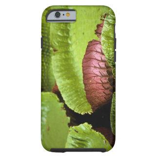 Belem, Brazil. Vitoria Regia (Victoria Tough iPhone 6 Case