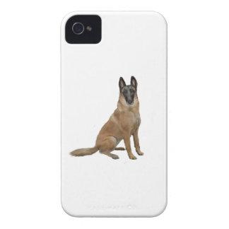 Belga Malinois iPhone 4 Case-Mate Protectores