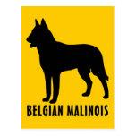 Belga Malinois Postal