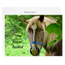 Belgian Draft Horse Birthday Invitation