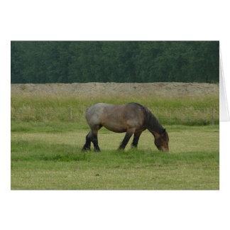 Belgian Draft Horse-brown/grey grazing Card