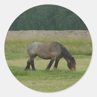 Belgian Draft Horse-brown/grey grazing Classic Round Sticker