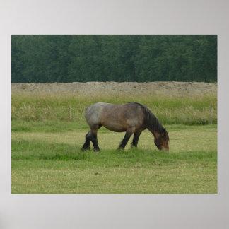 Belgian Draft Horse-brown/grey grazing Poster