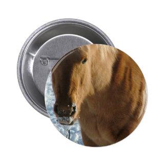 Belgian Draft Horse  Button