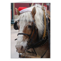 Belgian Draft Horse Christmas Card