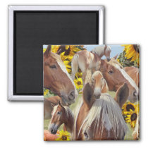 Belgian Draft Horse Collage Magnet