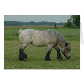 Belgian Draft Horse-color grey grazing Card