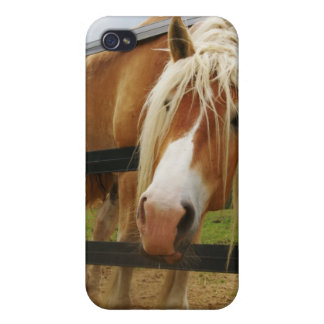 Belgian Draft Horse, Gimme a Carrot iPhone 4/4S Cover