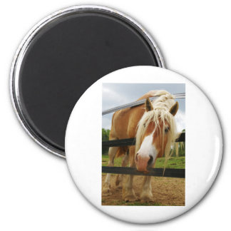 Belgian Draft Horse, Got Carrots? 2 Inch Round Magnet