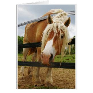 Belgian Draft Horse, Got Carrots? Greeting Cards