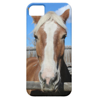 Belgian Draft Horse iPhone SE/5/5s Case