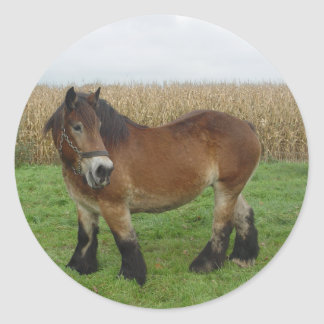 Belgian Draft Horse-looking back Classic Round Sticker