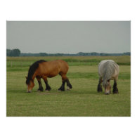Belgian Draft Horse-one grey, one brown Posters