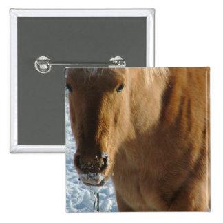 Belgian Draft Horse  Pin