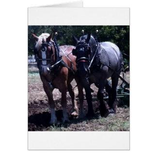 Belgian Draft Horses Card