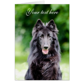 Belgian Groenendael dog custom text card